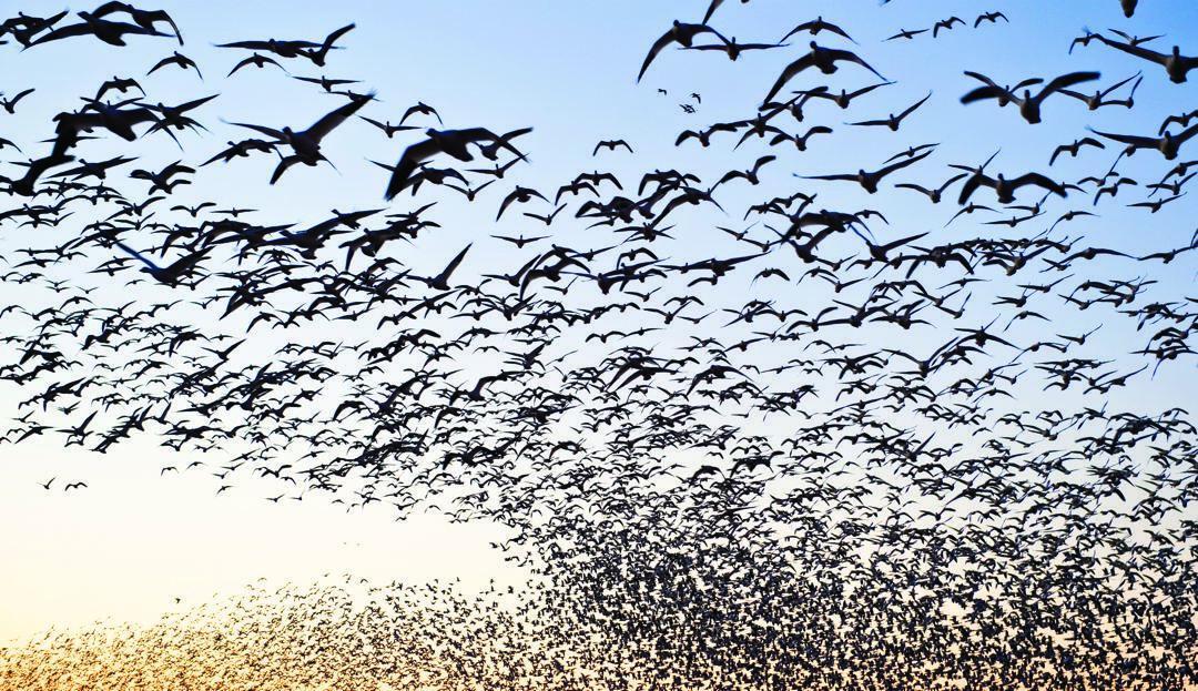 En el día Mundial de las Aves Migratorias | Periodico Oficial del PRM